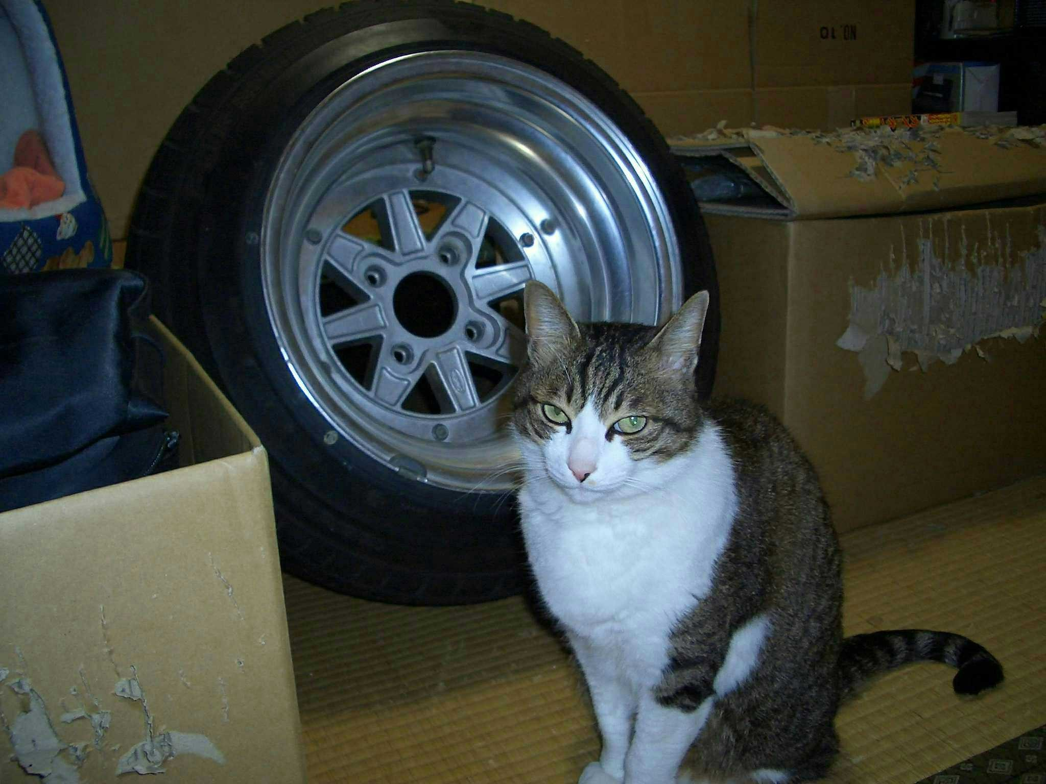 Deep dish SSR Mk II with cat